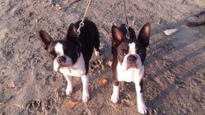 Panni & Lili