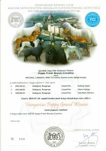 Hungarian Puppy Grand Winner